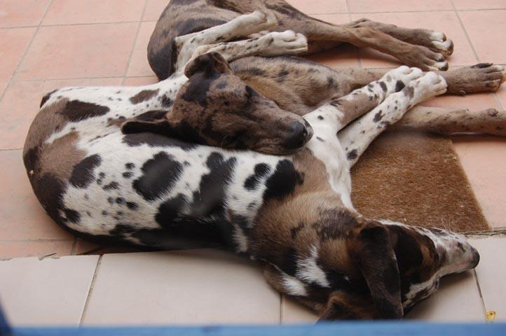 Pups 6 months