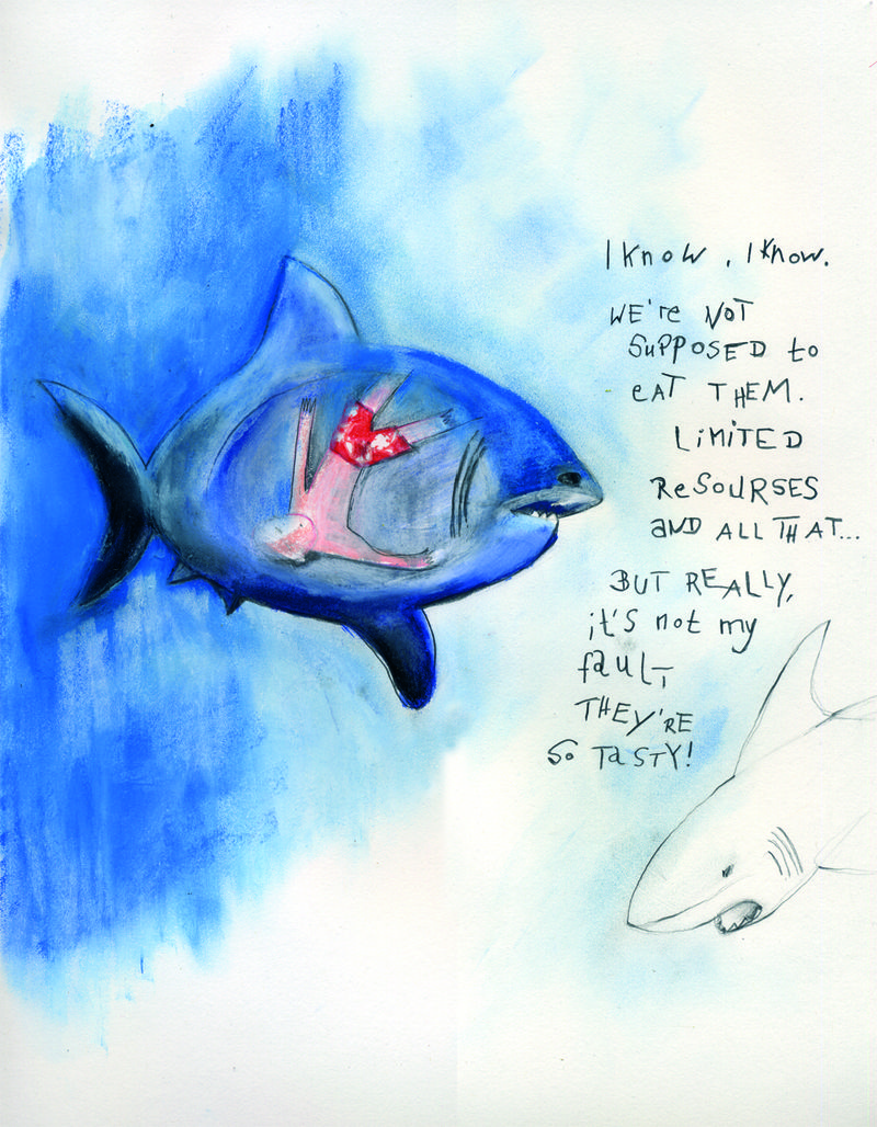 Blog_sharks
