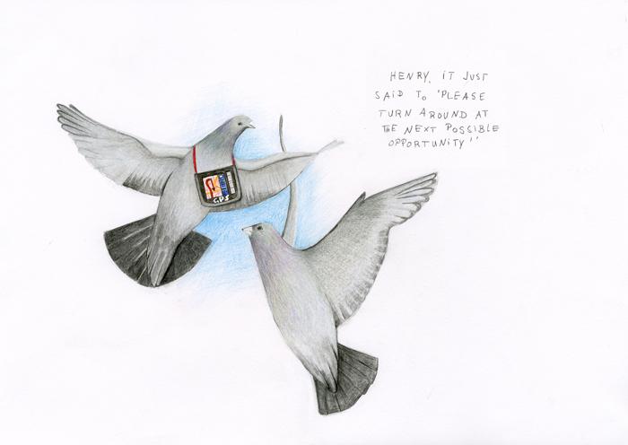Blog_pigeons_e