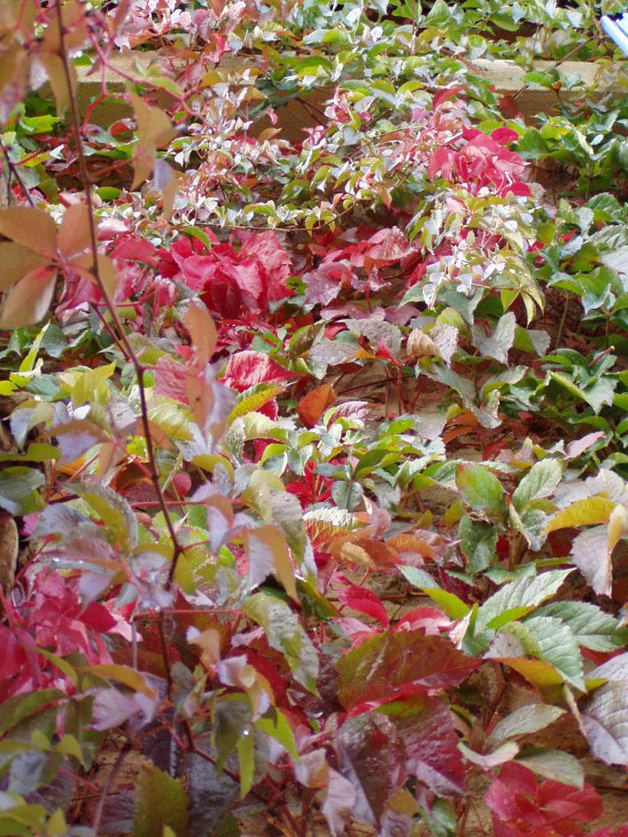 Autumn_colors_1