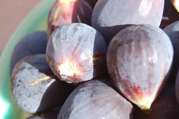 Autumn_figs